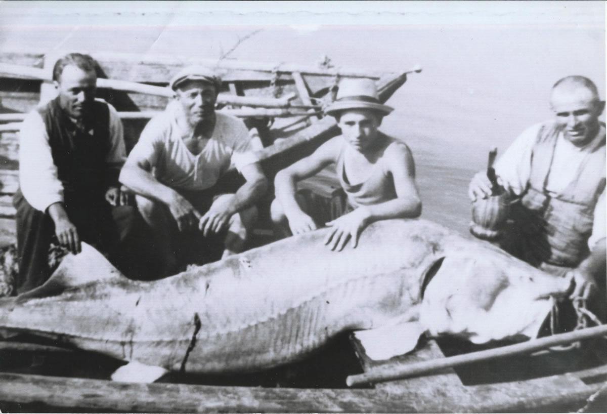 pesca dello storione